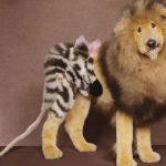 Peluquería canina 007