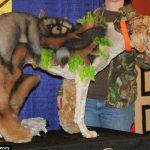 Peluquería canina 001