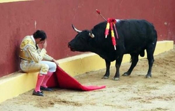 torero llorando