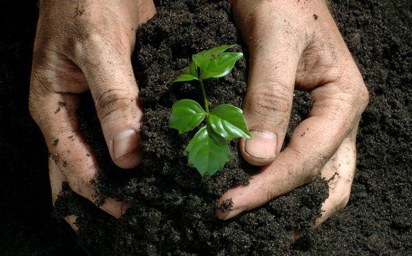 ¿Para qué sirven los residuos de café? Fertilizantes