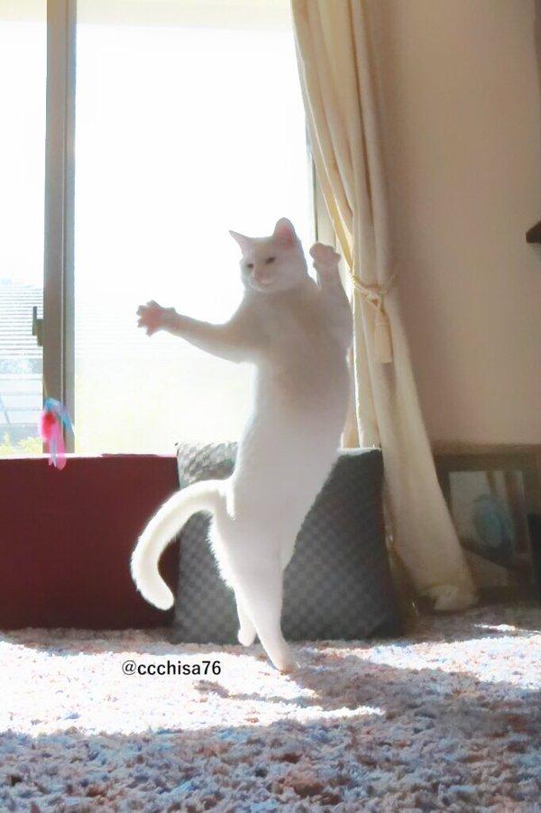 gato2.jpg