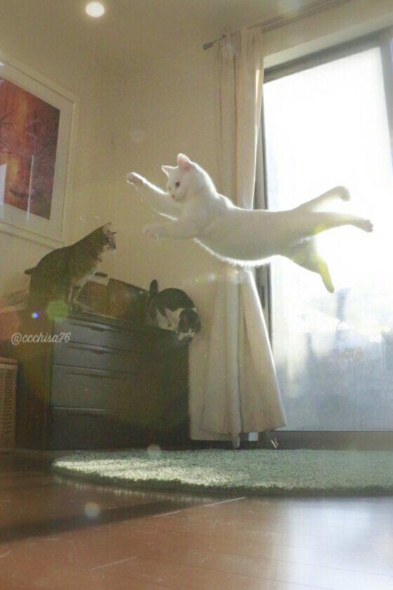 gato4.jpg