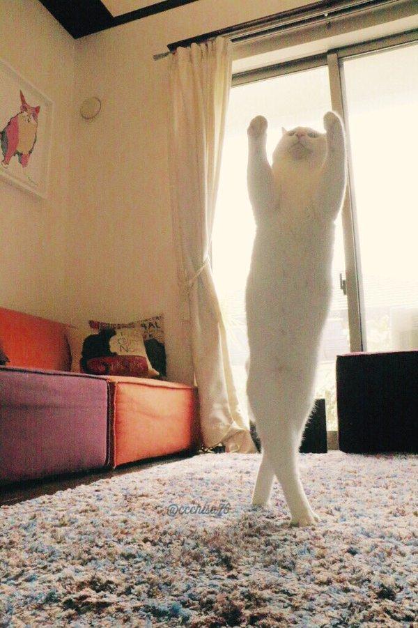gato6.jpg