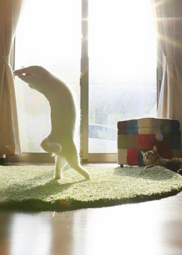 gato7.jpg