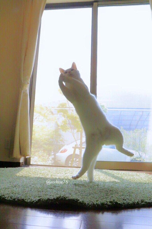gato8.jpg