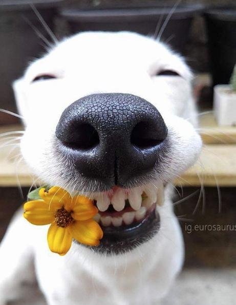 perrito sonrisa4