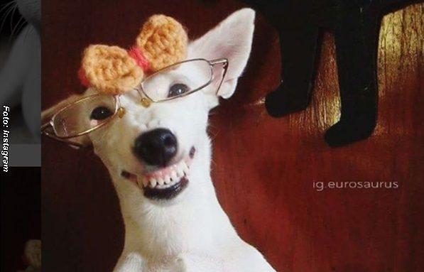El Perro más sonriente del mundo