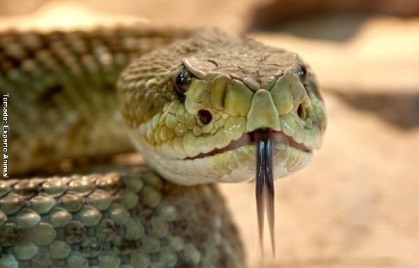 Serpiente sorprendió a pasajeros en un avión