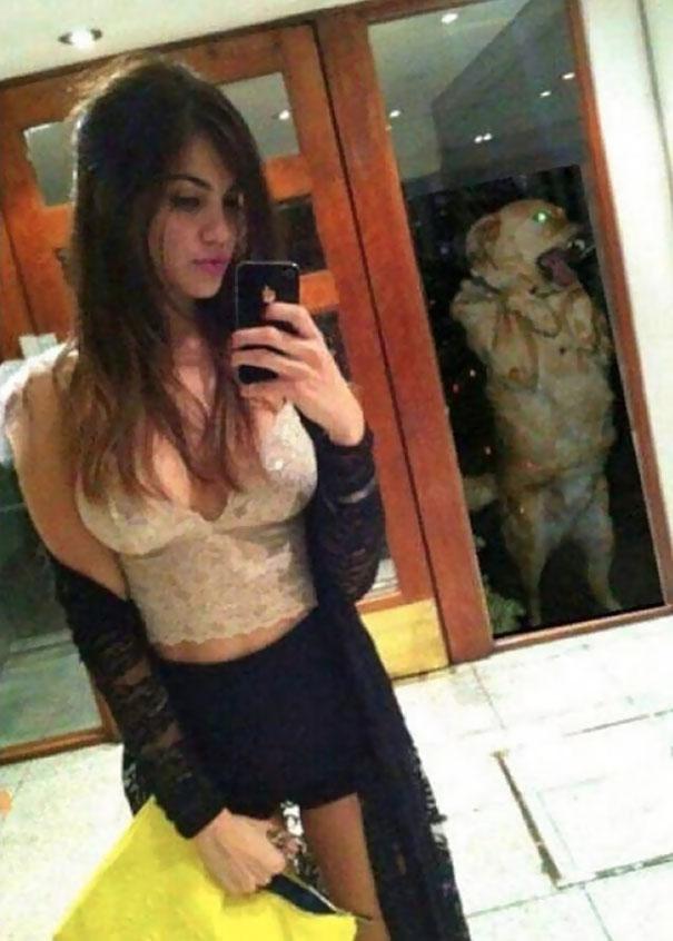 3. perro