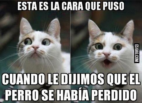 Los mejores memes en el dia internacional del gato 1