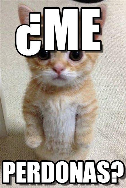 Los mejores memes en el dia internacional del gato 10