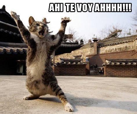 Los mejores memes en el dia internacional del gato 11