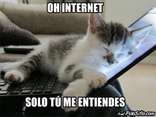 Los mejores memes en el dia internacional del gato 13