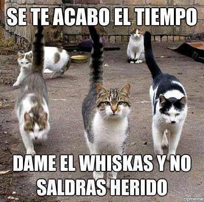 Los mejores memes en el dia internacional del gato 14