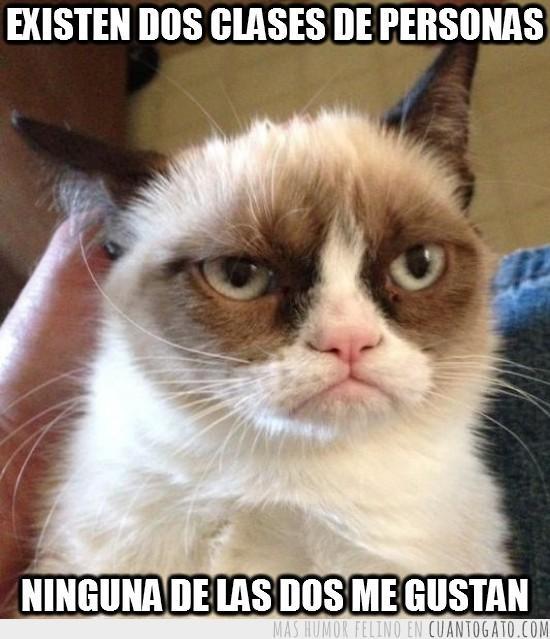 Los mejores memes en el dia internacional del gato 16