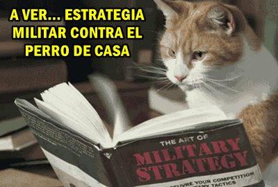 Los mejores memes en el dia internacional del gato 17