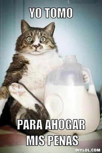 Los mejores memes en el dia internacional del gato 18