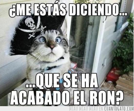 Los mejores memes en el dia internacional del gato 19