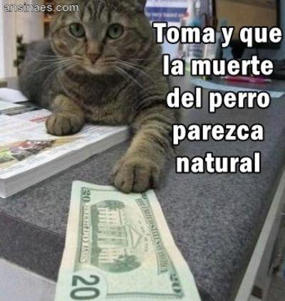 Los mejores memes en el dia internacional del gato 2