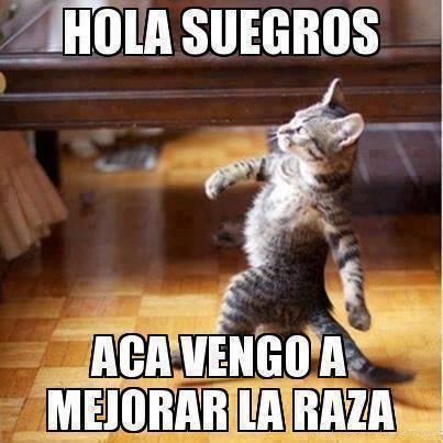 Los mejores memes en el dia internacional del gato 20