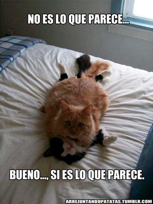Los mejores memes en el dia internacional del gato 4