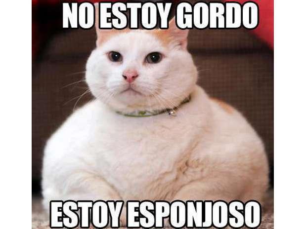 Los mejores memes en el dia internacional del gato 5