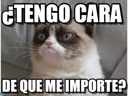 Los mejores memes en el dia internacional del gato 6
