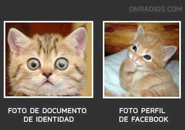 Los mejores memes en el dia internacional del gato 7