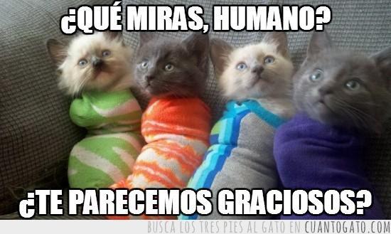 Los mejores memes en el dia internacional del gato 8