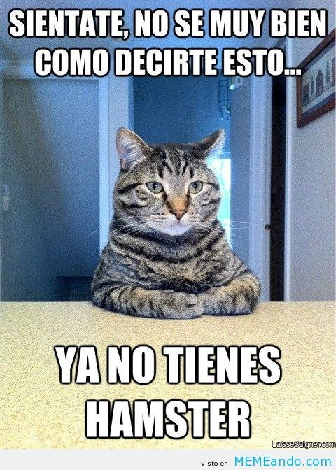Los mejores memes en el dia internacional del gato 9