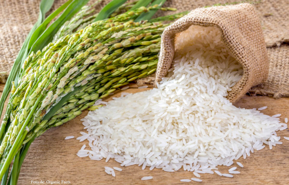 ¿Cómo utilizar el arroz para atraer dinero y prosperidad?