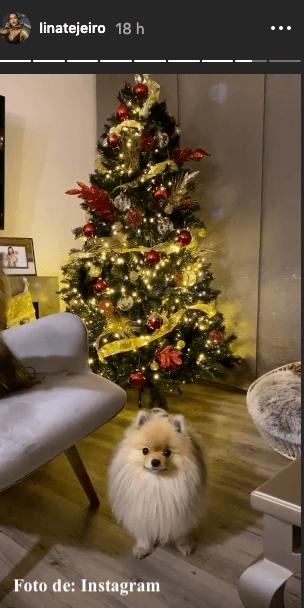Árbol de navidad de Lina Tejeiro con su perro