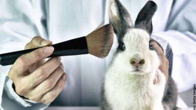 Colombia prohíbe experimentos con animales para uso cosmético