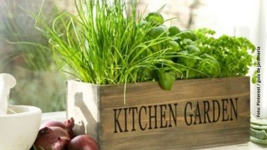 Cómo cultivar una pequeña huerta de especias y aromáticas en casa