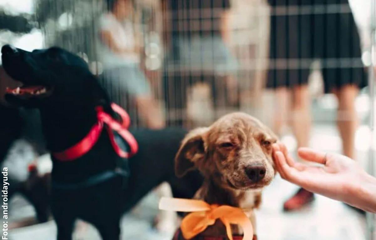 Los beneficios de adoptar una mascota
