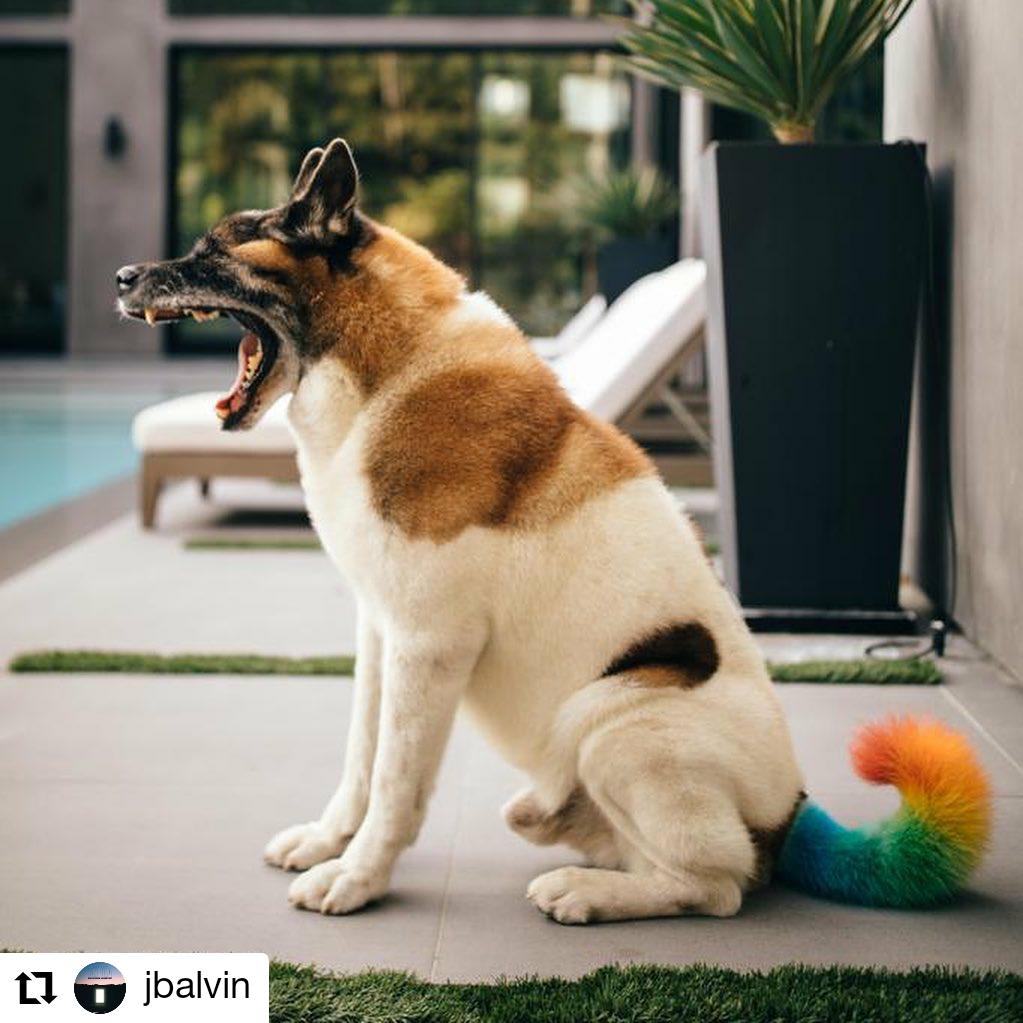 perro con la cola pintada de colores