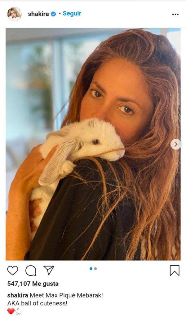 mujer abrazando a un conejo