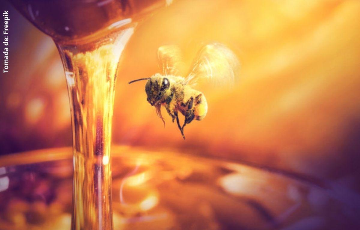 foto de una abeja con miel