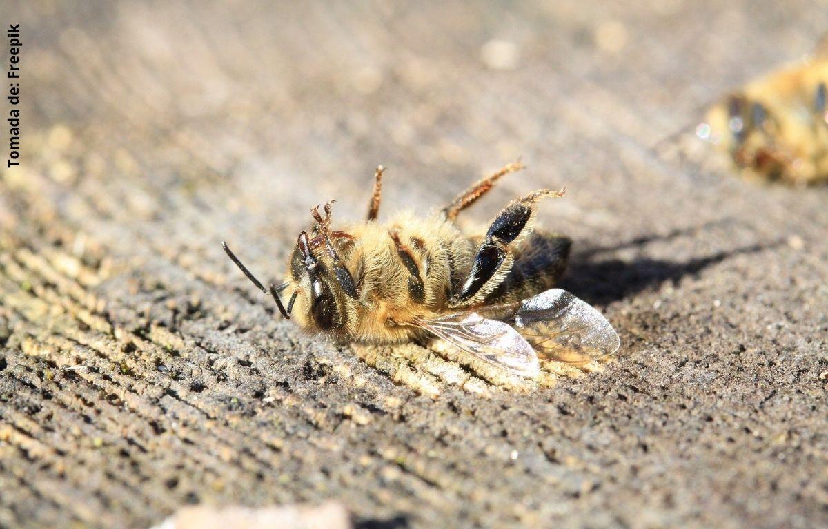 foto de una abeja muerta