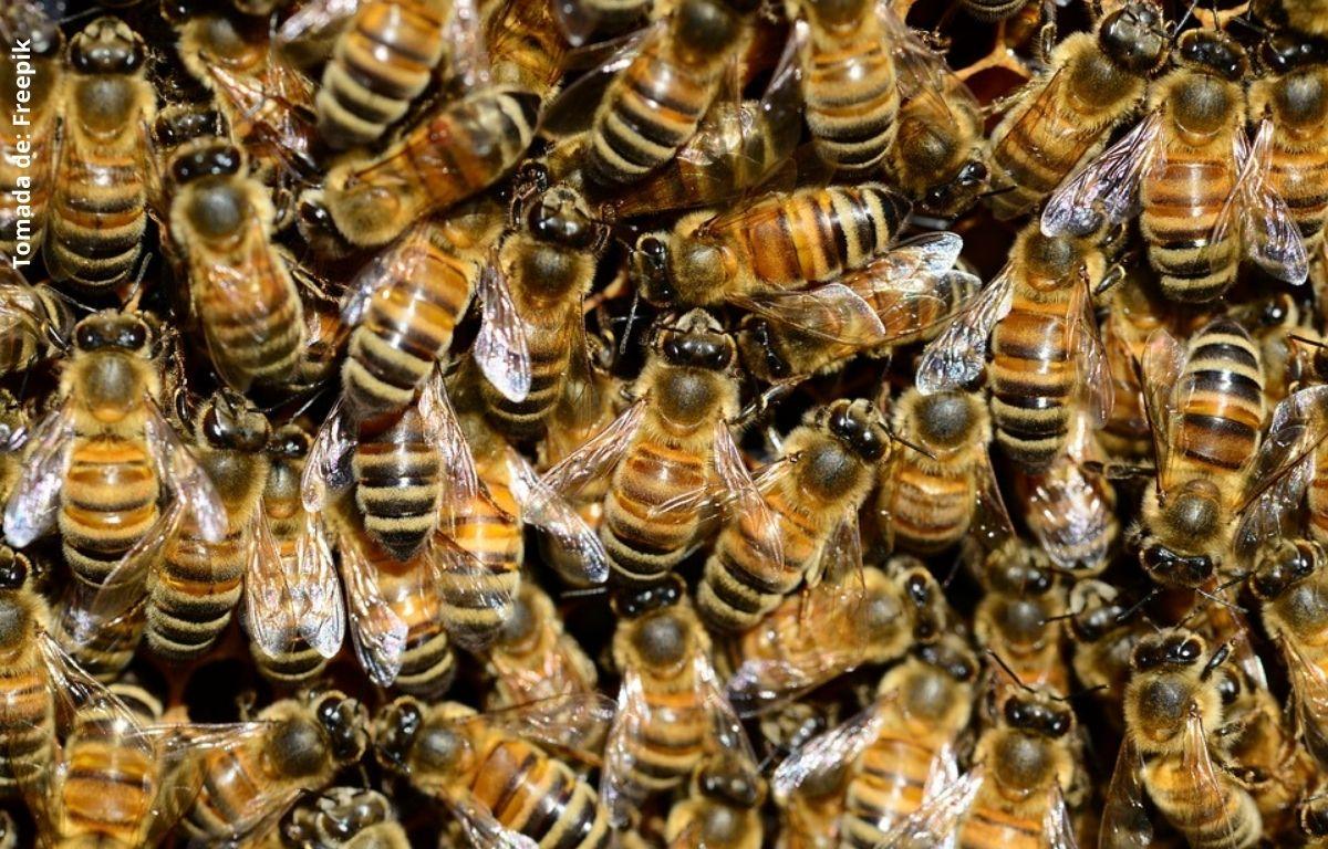 foto de muchas abejas