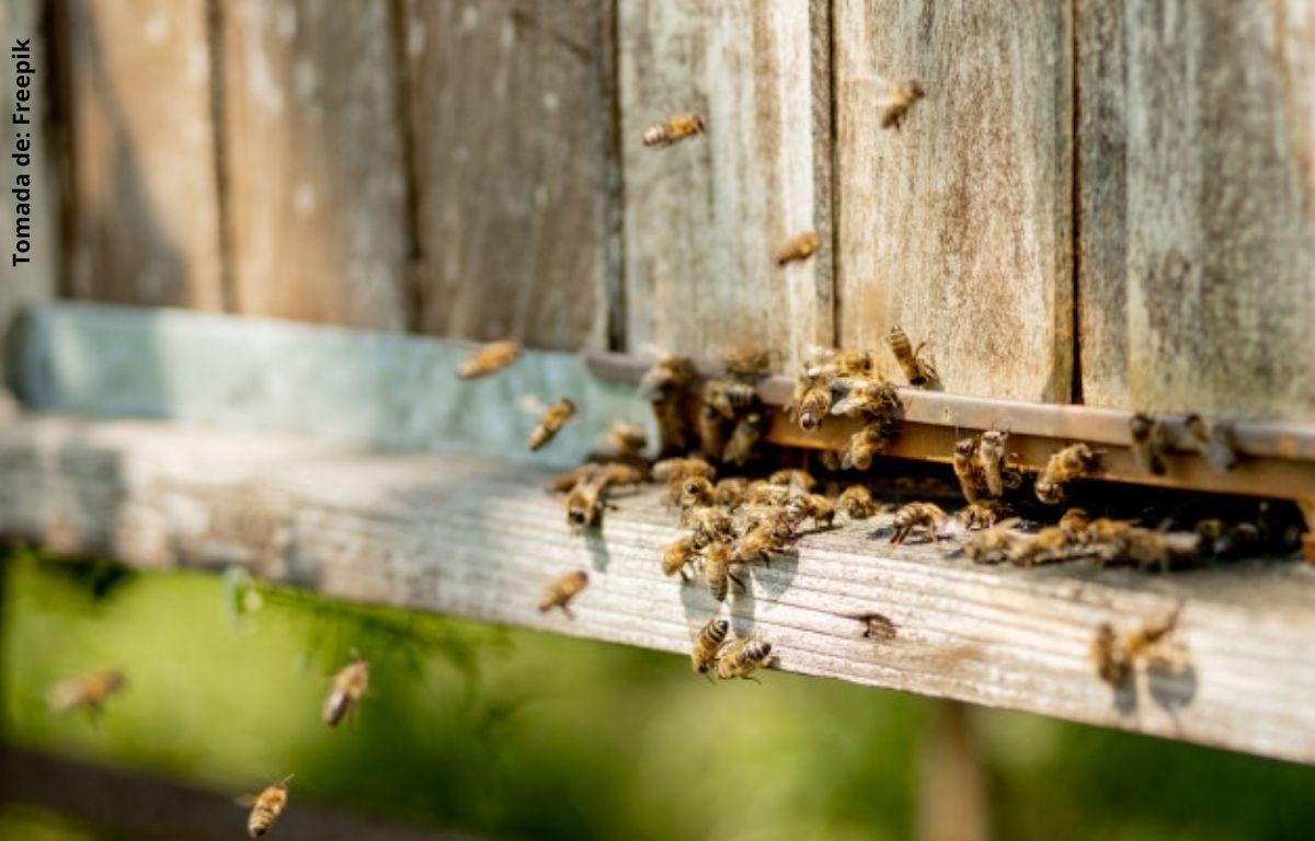 foto de abejas en una casa