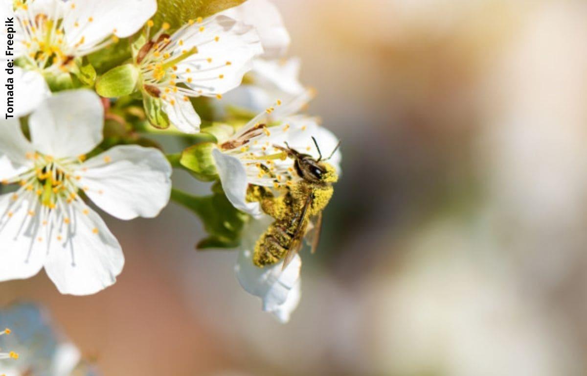 ¿Qué significa soñar con abejas?