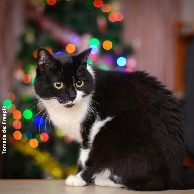 foto de un gato y un árbol de navidad