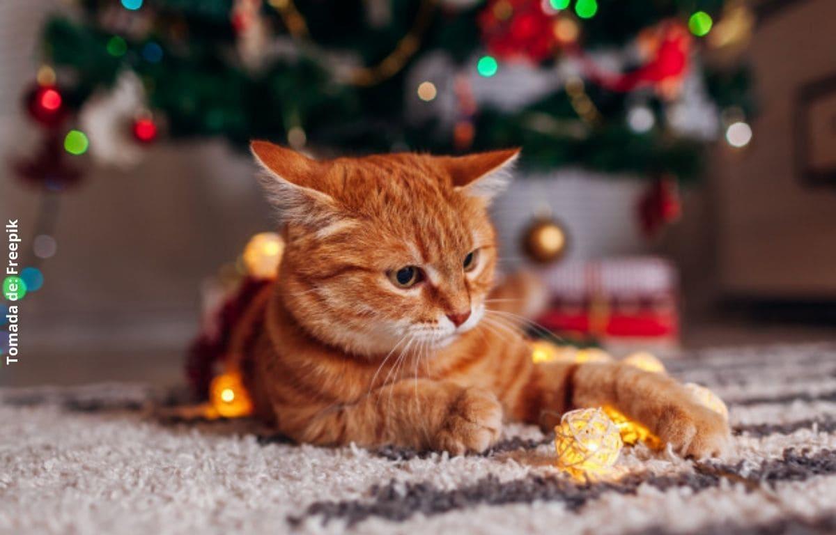 Cómo evitar que mi gato destruya el árbol de navidad
