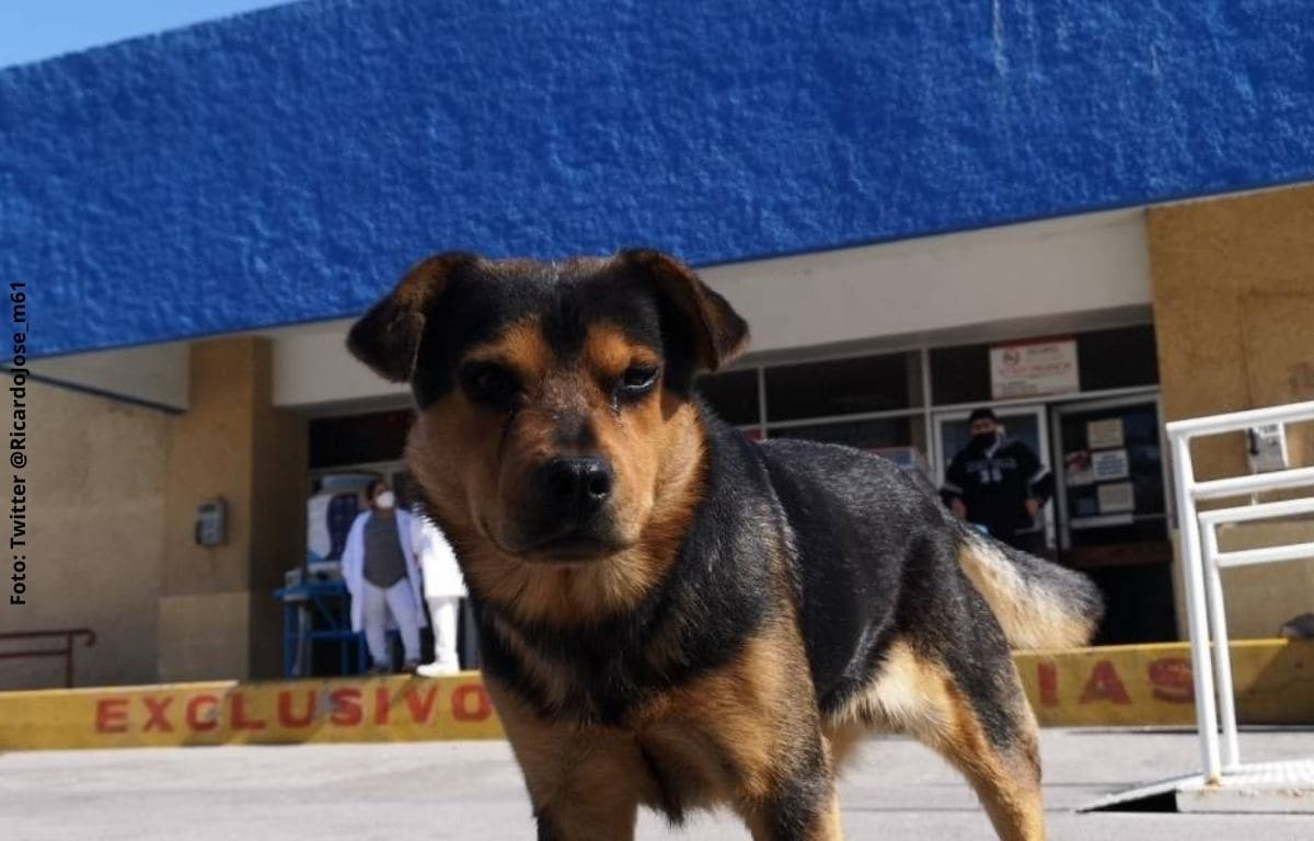 Perrito espera afuera de un hospital a su dueño que murió por covid