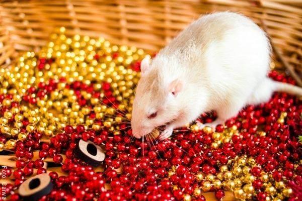 Foto de un ratón blanco