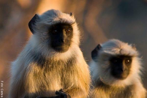 Foto de 2 micos