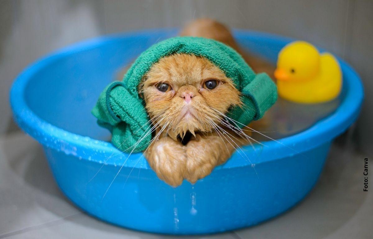 foto de un gato bañándose