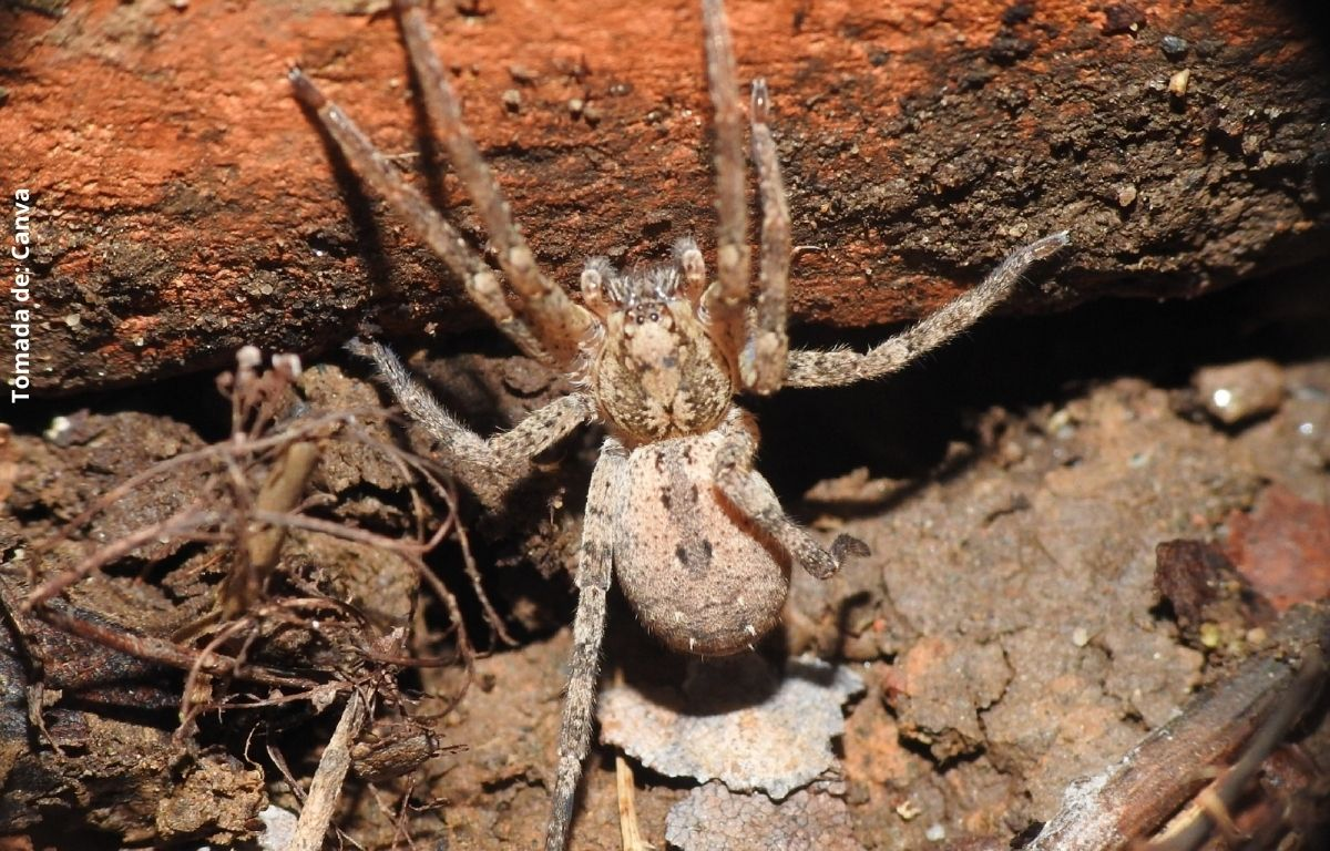foto de una araña