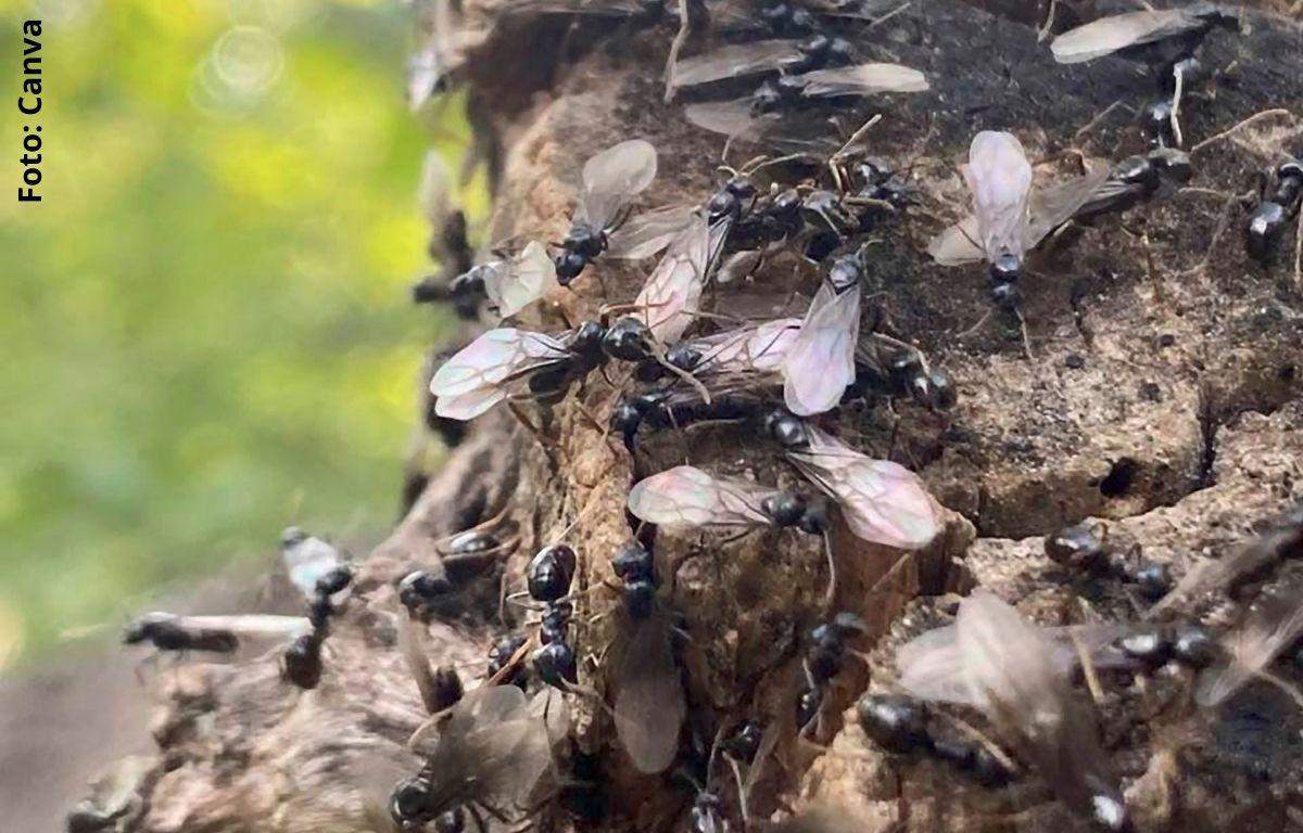foto de muchos insectos